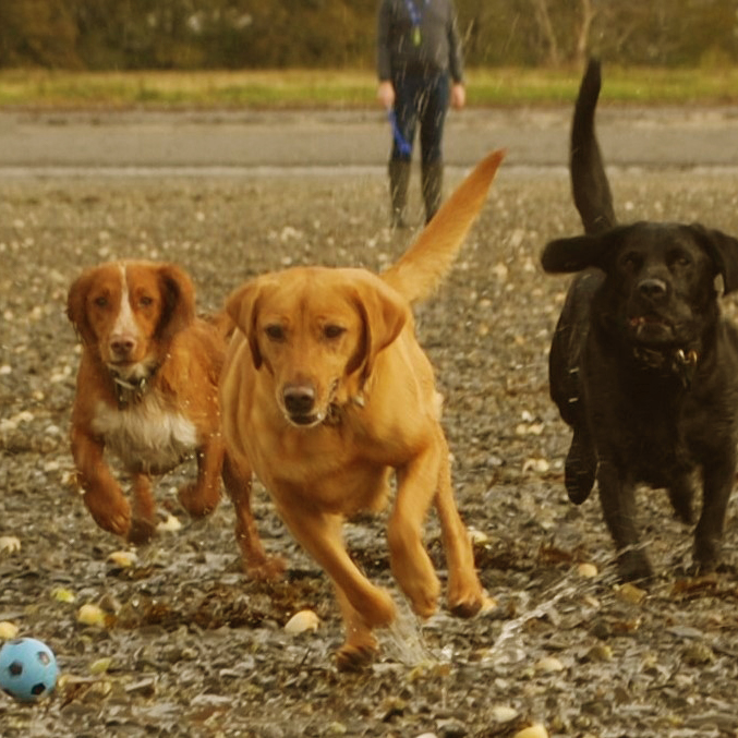 dogs_3